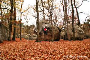 Fontainebleau - bouldering in the classic area of Bas Cuvier